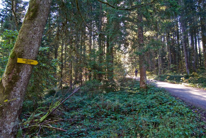 Gut ausgeschilderter Weg in Richtung Tegernseer Hütte