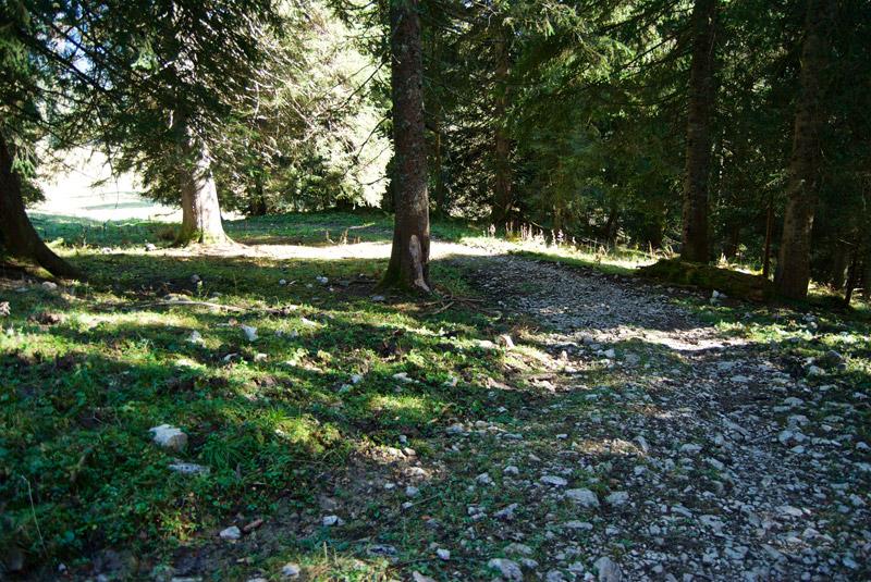 Breiter Trail von der Rauhalmhütte