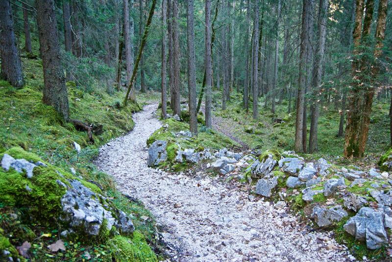 Schöner Trail durch den Wald