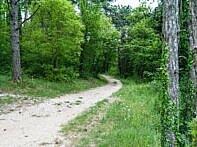 Einstieg in den Jungle Trail