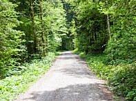 Der Weg wird flacher