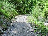MTB Trail druchs grüne Steinbachtal