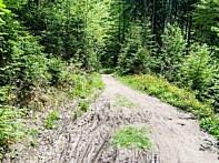 Der Trail wird sanfter