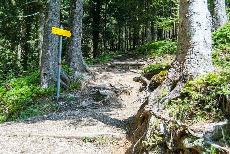 Der steile Trail von der Aueralm