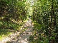 Waldboden Navene Trail
