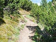 Der MTB Trail befinnt leicht