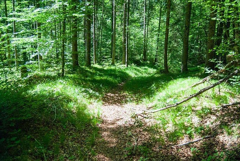 Verwachsener Trail im Wald