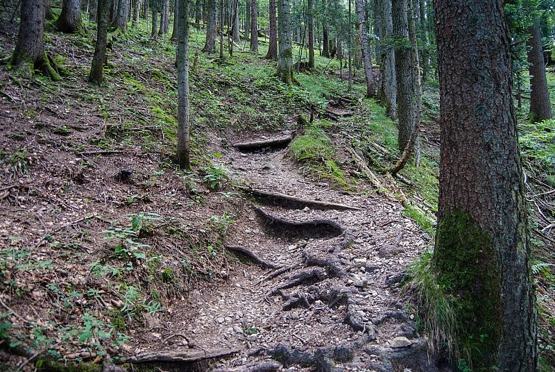 Treppenstufen am Geierssteintrail