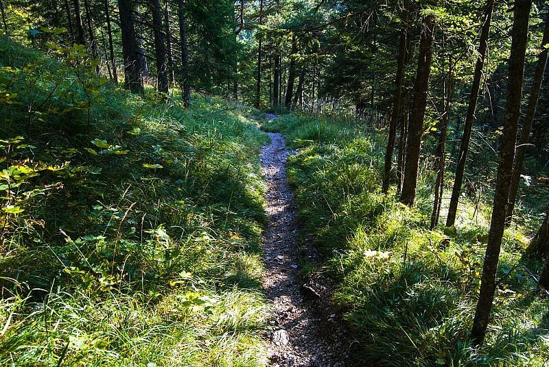 Downhill am Seinsbachtrail