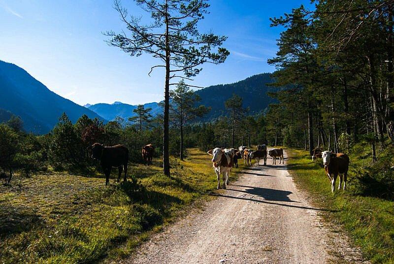 Auf dem Weg von Scharnier ins Karwendeltal