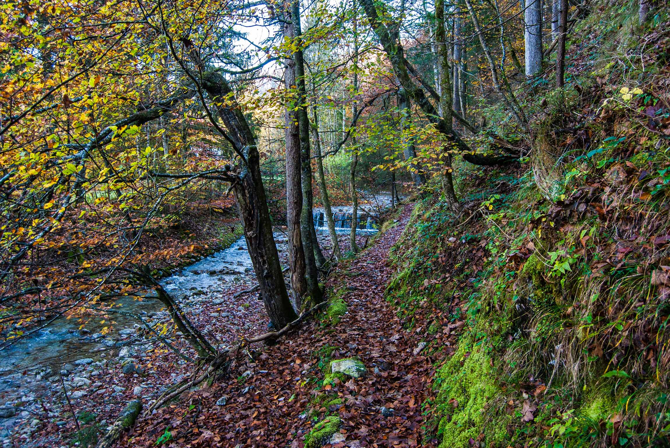 Trail zum Weitsee