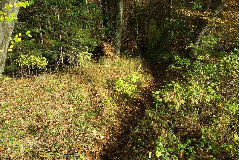 Wald Trail Ammersee