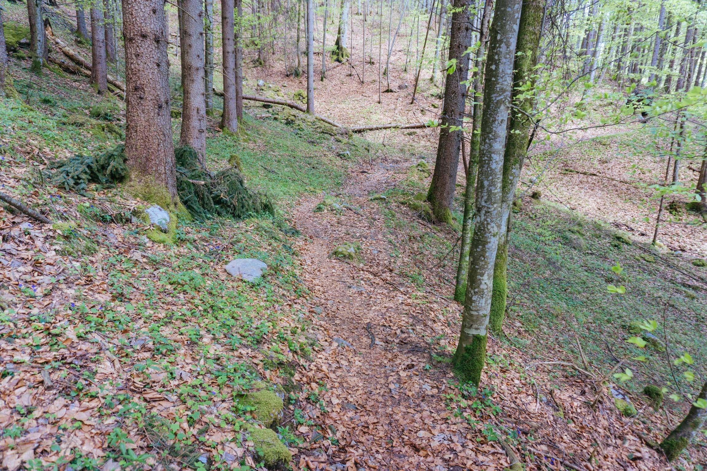 Kleiner Trail am Walchensee