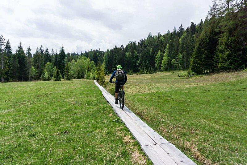 Holzplanken am Moos