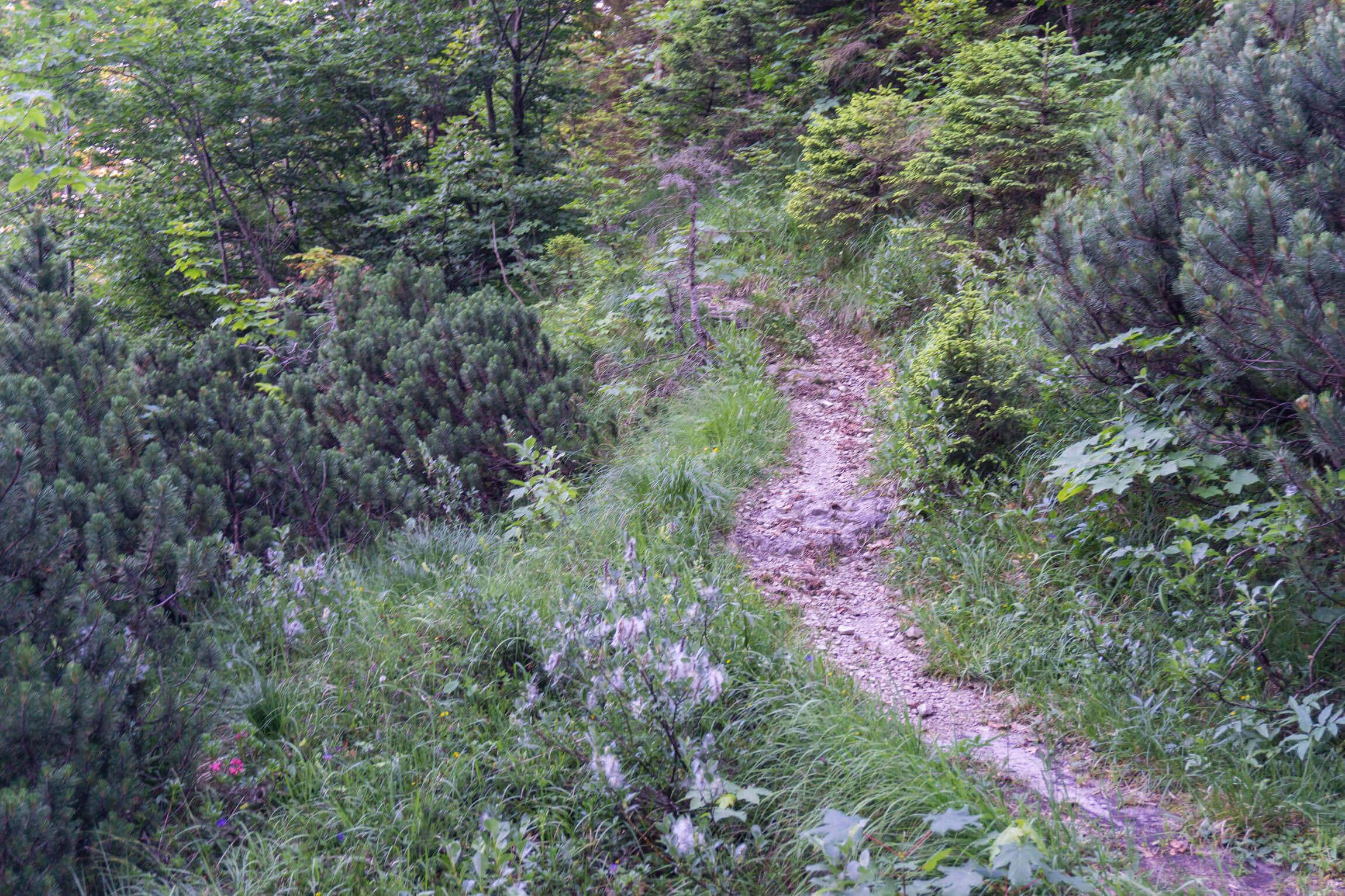 Pionierweg Trail MTB