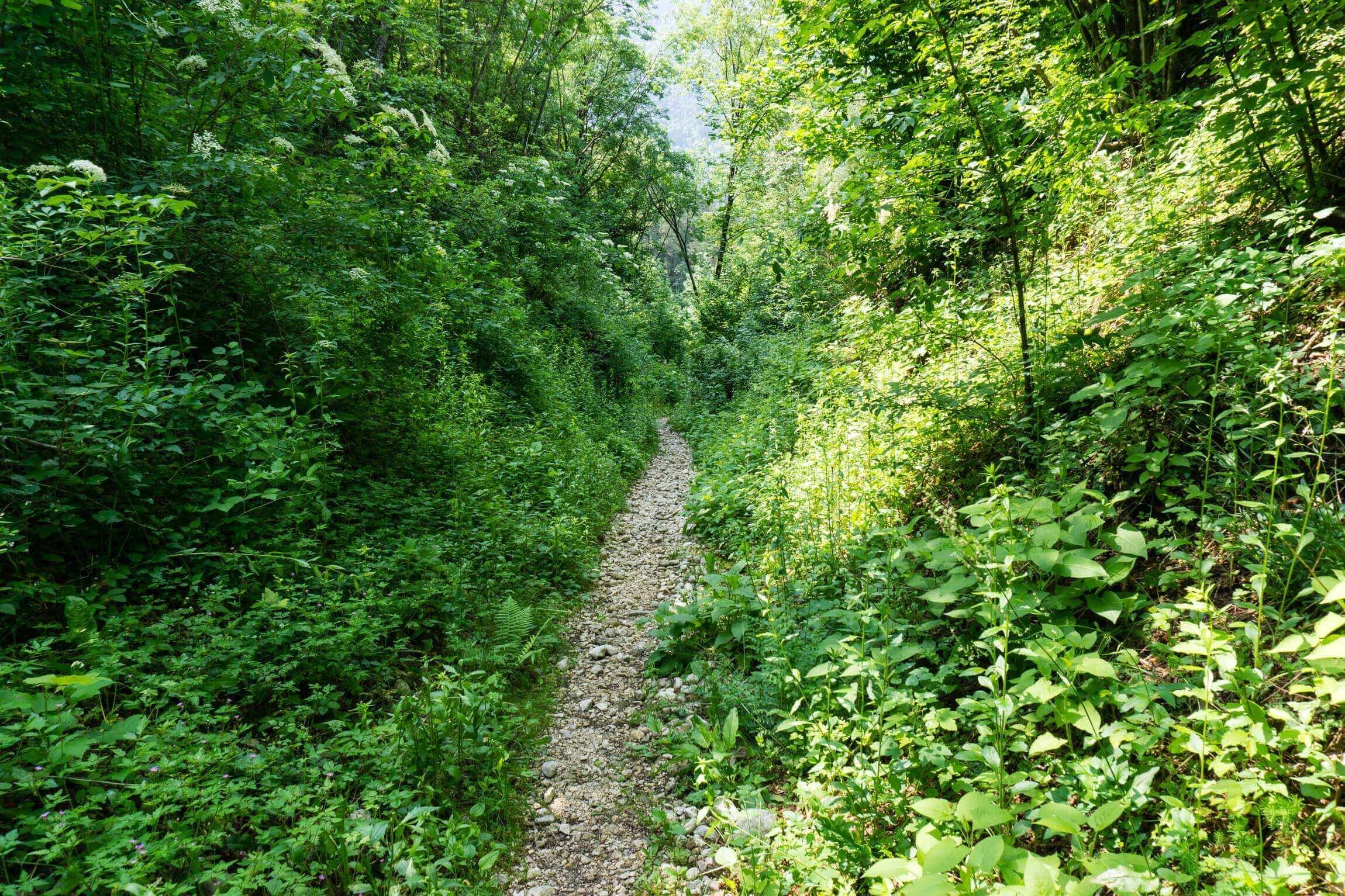 Trail in Bovec