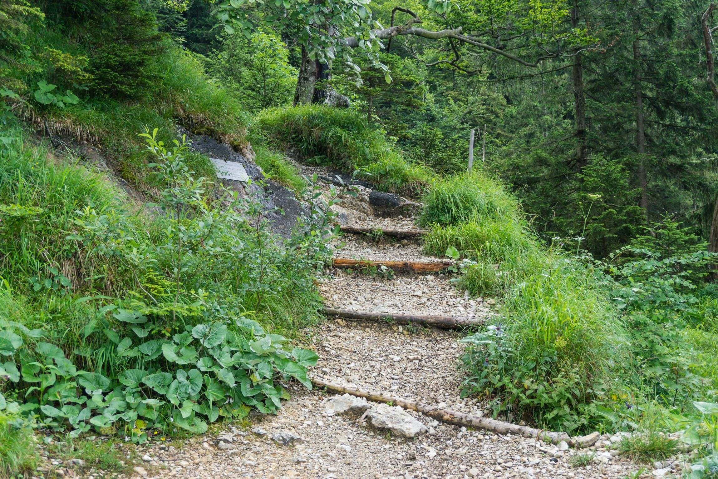 Stufen am Trail