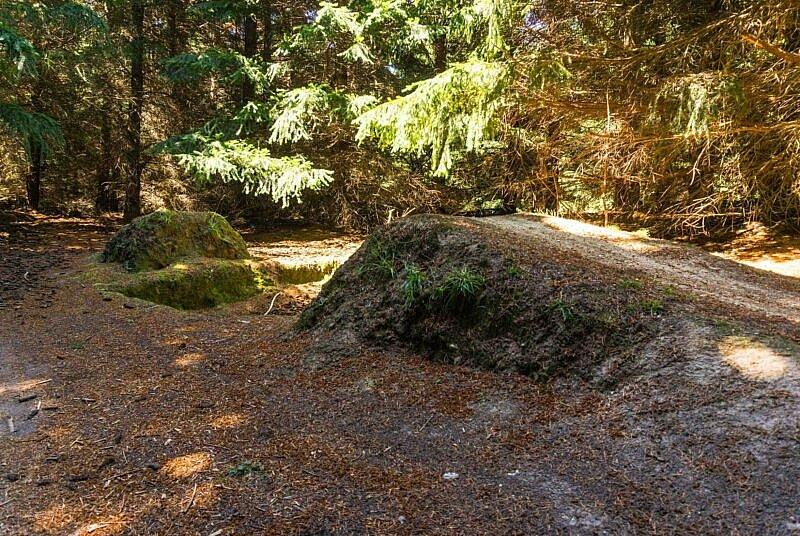 Sprung Sticky Forest