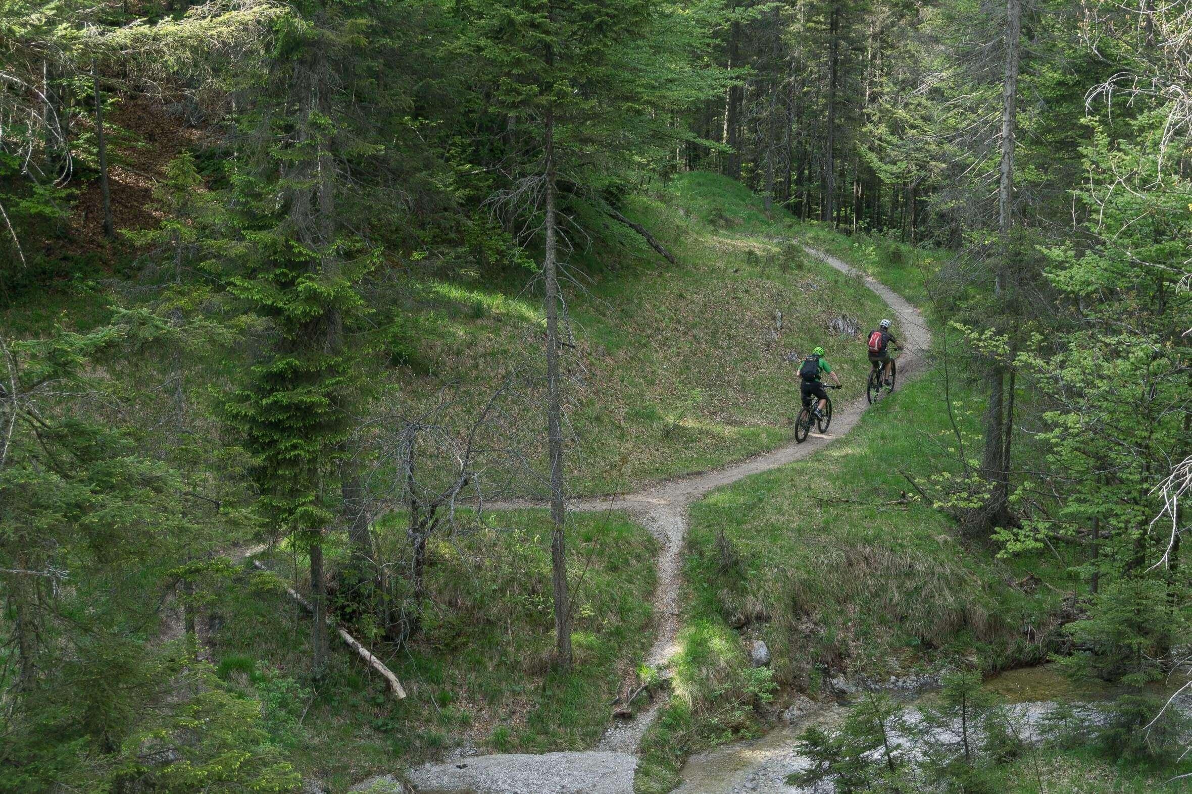 Blick auf den Hochkopf Trail