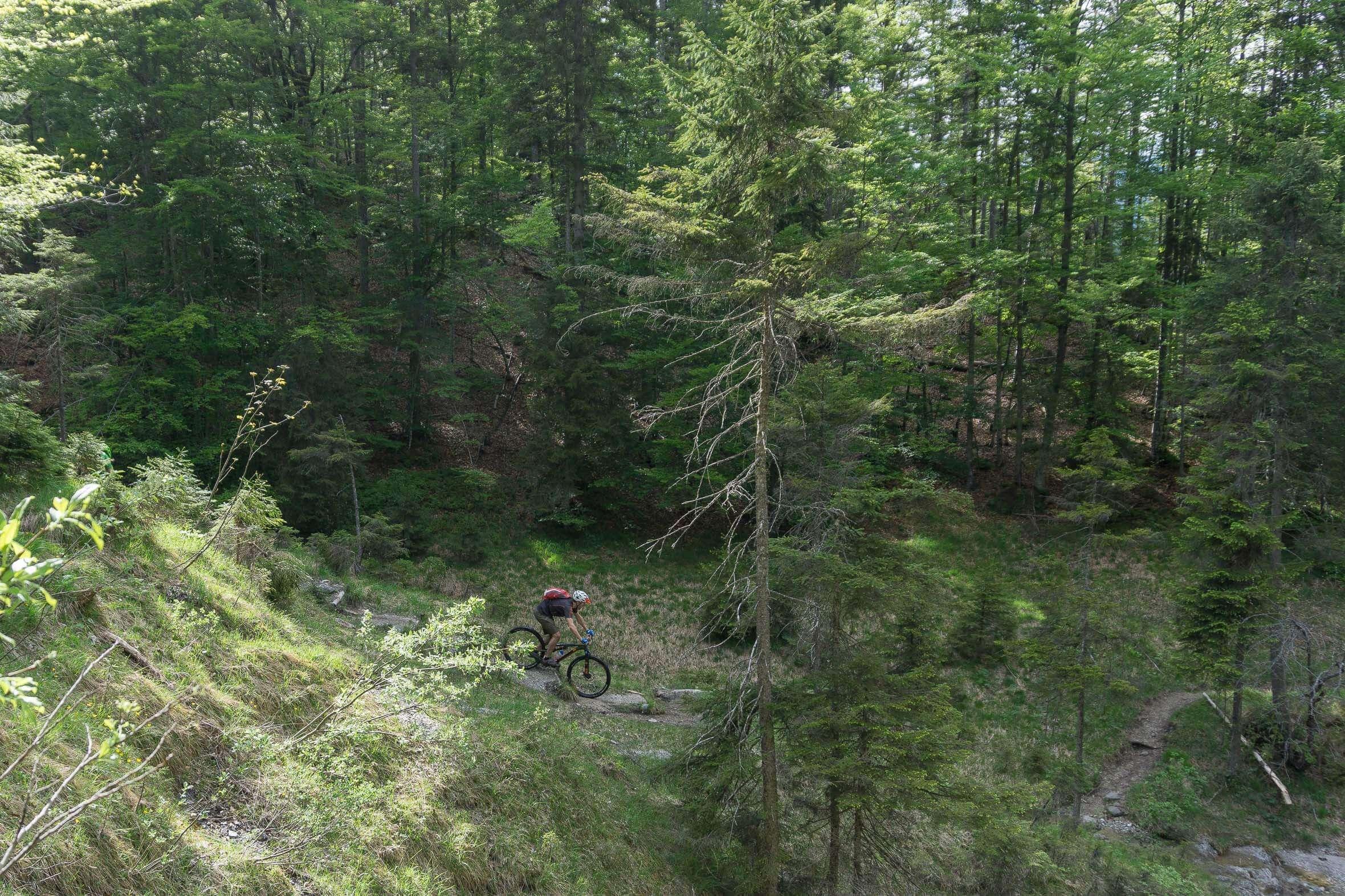 Stufen am Altlacher Hochkopf Trail