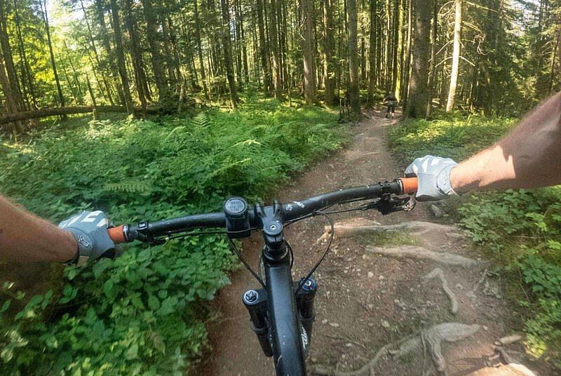 Wald Fleckalm Trail