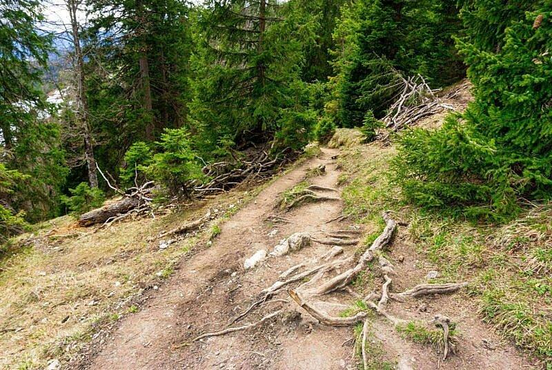 Snakeline Trail Start